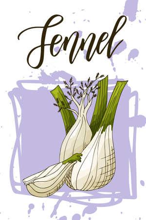 Vegetable food banner. Fennel sketch. Organic food poster. Vector illustration