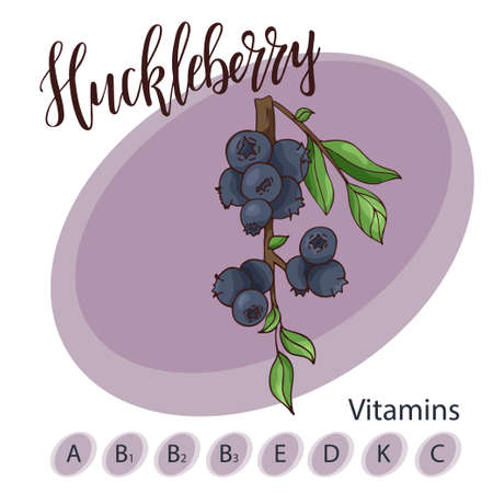 Vector fruit element of huckleberry. Hand drawn icon with lettering. Food illustration for cafe, market, menu design. Çizim