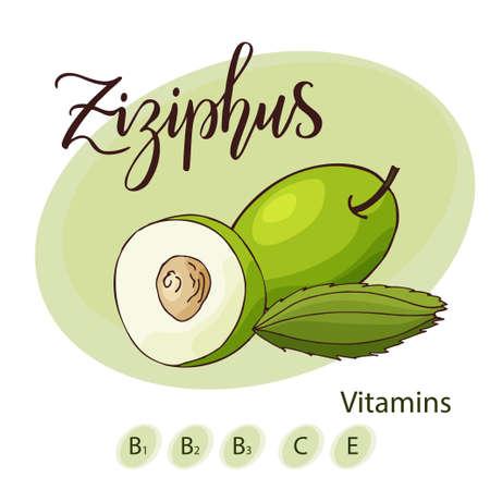 brushed: Vector fruit element of ziziphus. Hand drawn icon with lettering. Food illustration for cafe, market, menu design. Illustration