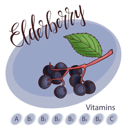 Vector fruit element of elderberry. Hand drawn icon with lettering. Food illustration for cafe, market, menu design.
