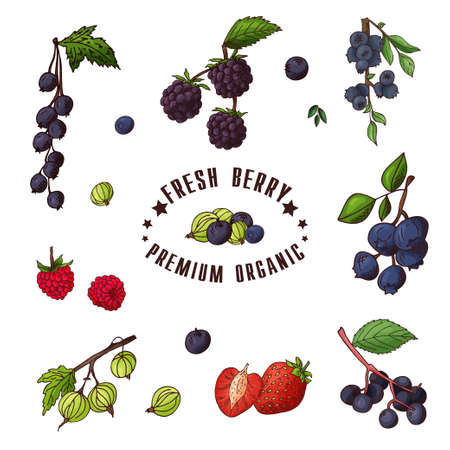Hand drawn illustration of currant, razz, blueberry, stawberry, gooseberry, blackberry, elderberry, huckleberry Set og fruits Colorful sketches elements Illustration