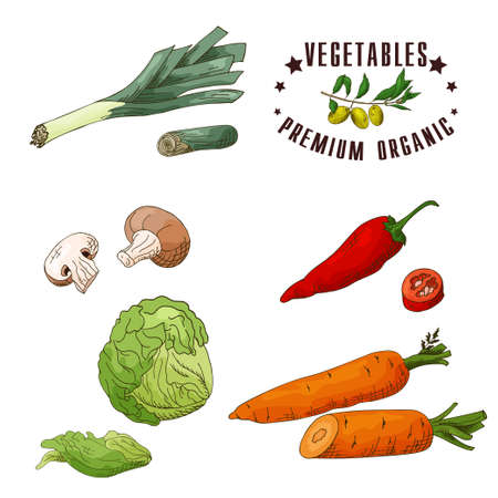 Vector vegetable element of leek, mushroom, chilli, iceberg lettuce, carrot. Hand drawn icon with lettering. Food illustration for cafe, market, menu design.