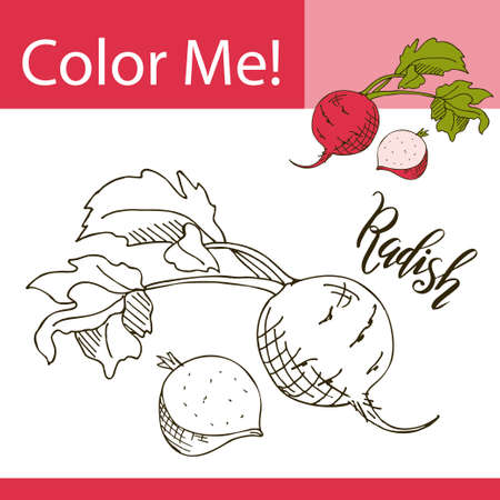 79811949 education coloring page with vegetable hand drawn vector illustration of radish