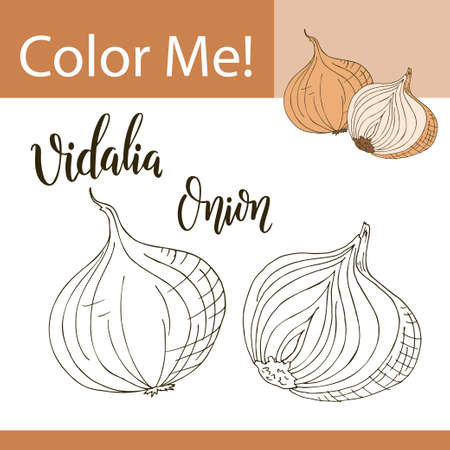 79876837 education coloring page with vegetable hand drawn vector illustration of vidalia onion