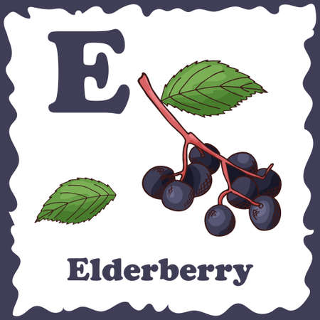 Alphabet for kids with fruits. Healthy letter abc E-Elderberry