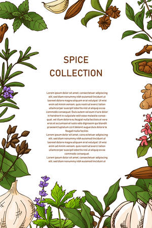 Card design with aromatic plants sketch. Hand drawn herbs and spices. Poster template. Vector illustration.