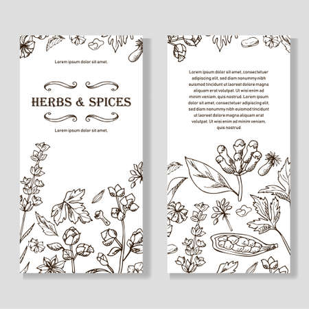 Banner set with hand drawn elements. Herbs and spices in sketch style. Design for tes, cosmetics, health products. Vector illustration