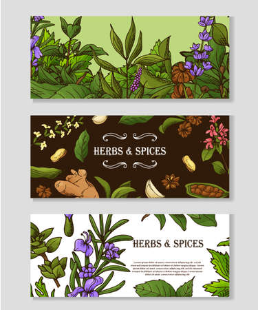 Banner set with hand drawn elements. Herbs and spices in sketch style. Design for tes, cosmetics, health products. Vector illustration. Ilustracja