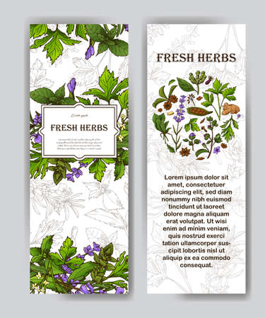 Card with place for text. Herbs banner in sketch style. Poster design for your product. Vector illustration. Иллюстрация