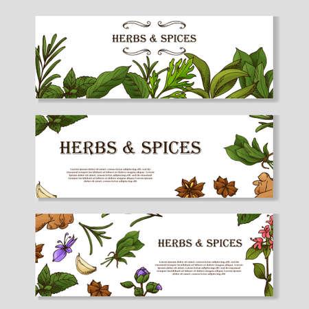 Carte avec place pour le texte. Bannière d'herbes dans le style de croquis. Conception d'affiches pour votre produit. Illustration vectorielle. Vecteurs
