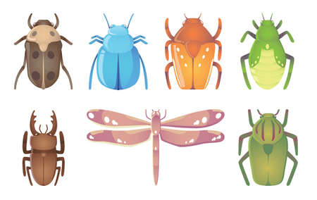 Vector illustration of seven funny beautiful bugs
