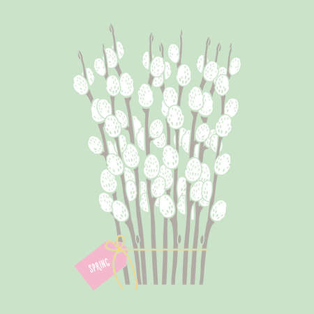 spring illustration, pussy willow