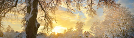 Snow-covered mighty tree and country house in the background. Winter sunset. Pure golden evening sunlight. Atmospheric landscape. Idyllic rural scene. Christmas vacations in Latvia. Seasons, ecology
