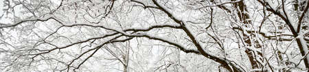 Silhouette of the snow-covered black tree branches against cloudy blue sky. Winter wonderland. Panoramic image, graphic resource, texture, background. Seasons, climate change, Christmas concepts Stockfoto