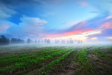 Epic colorful sunset sky and fog above the green plowed agricultural field, forest in the background. Dramatic cloudscape. Rural scene. Finland