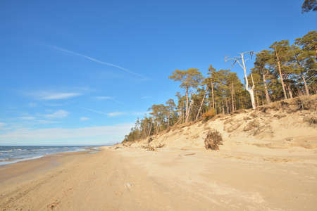 Baltic sea shore during low tide on a sunny summer day, Latvia. Sand dunes and old pine trees. Idyllic seascape. Vacations, travel destinations, climate change and global warming concepts 免版税图像
