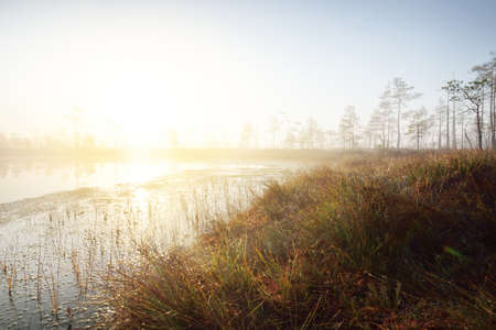 Swampy forest lake in a thick mysterious fog at sunrise. Cenas tirelis, Latvia. Golden sunlight through the evergreen tree trunks. Symmetry reflections on the water. Idyllic autumn landscape Zdjęcie Seryjne
