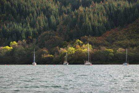 Sloop rigged yachts anchored on mooring near the rocky shore of Crinan canal. Coniferous forest in the background. Argyll and Bute, Scotland, UK