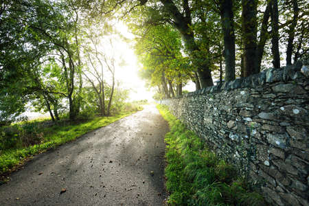 An empty bicycle road under the green trees and an old wall in the park of a small village Rhu. Scotland, UK Zdjęcie Seryjne