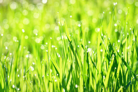 Green grass with dew drops at sunrise, texture, close-up. Abstract natural pattern. Sun flares blurred in bokeh. Graphic resources, macro photography, concept art, tranquility, pure nature concepts