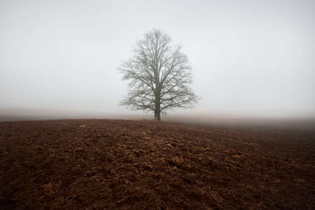 Country landscape. An empty agricultural field in a strong morning fog. Old oak tree without leaves close-up. Poland Foto de archivo