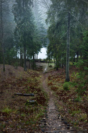 Morning fog. Pathway to the forest lake. Pine and fir trees close-up. Latvia