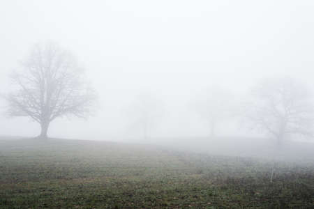Country landscape. An empty agricultural field in a strong morning fog. Old oak tree without leaves close-up. Latvia Foto de archivo