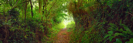 Footpath in a green oak tree forest in Brittany, France. Natural tunnel. Breathtaking panoramic view. Atmospheric landscape. Travel destinations, eco tourism, pure nature, environmental conservation Stock Photo