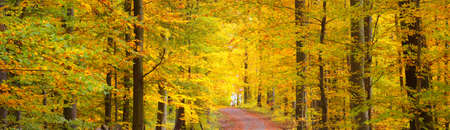 A pathway through the golden mossy beech trees. Panoramic picturesque scenery. Fairy autumn landscape. Pure morning sunlight through the tree trunks. Natural tunnel. Heidelberg, Germany