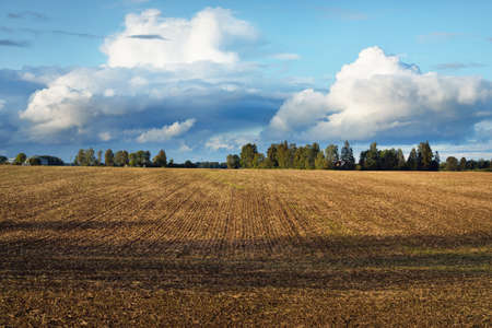 Storm clouds above the plowed agricultural field, forest in the background. Country autumn landscape. Latvia