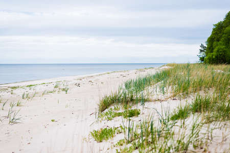 A view of the Baltic sea shore on a cloudy summer day. Green grass and pine trees in the background. Ruhnu island, Estonia