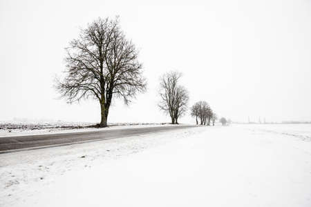 An empty country rroad through the snow-covered fields on a cloudy winter day, Latvia
