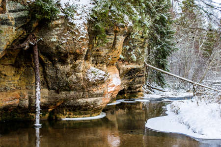 Winter forest landscape. Cliffs near the river and pine trees in the background. Gauja National Park, Latvia