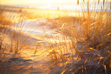 Coast of the Baltic sea at sunset. Golden evening sunlight. Sand dunes and plants close-up. Early spring in Latvia. Nature, environment, ecology 免版税图像