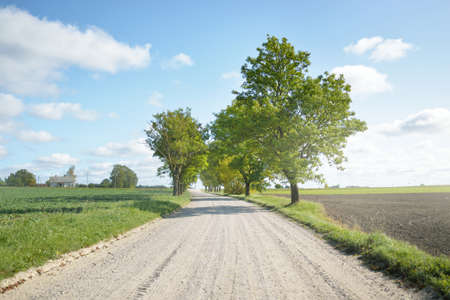 Country road through the agricultural fields on a clear day. Warm midday sunlight, clear sky. A view from the car. Trees close-up. Travel destinations, vacations, freedom, driving, transportation