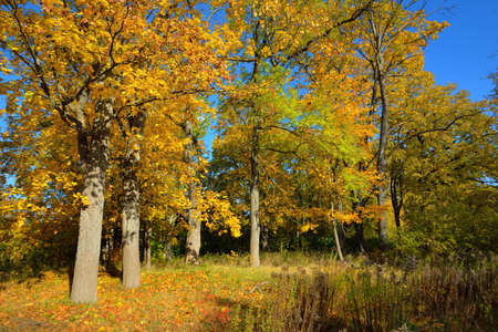 Old asphalt road near the lake and golden forest on a clear day. Autumn landscape. Seasons, ecology, ecotourism, environmental conservation, travel, driving, cycling, walking, recreation
