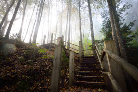 Low angle view of the wooden forest stairway in a sunrise fog. Soft morning light. Old trees, colorful golden leaves and plants close-up. Idyllic autumn scene. Gauja national park, Sigulda, Latvia
