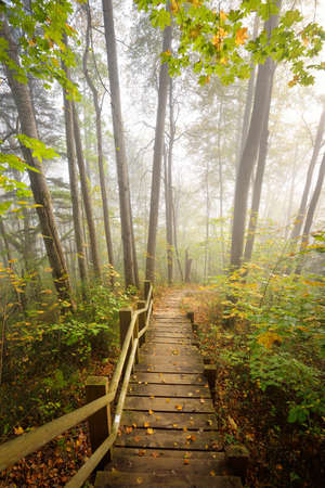High angle view of the wooden forest stairway in a sunrise fog. Soft morning light. Old trees, colorful green and golden leaves close-up. Idyllic autumn scene. Gauja national park, Sigulda, Latvia