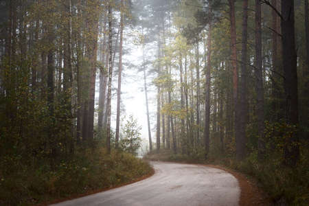 Winding rural road (pathway) through the evergreen forest in a fog at sunrise. Ancient pine trees, green and golden plants, close-up. Ecology, autumn, ecotourism, environmental conservation, nature