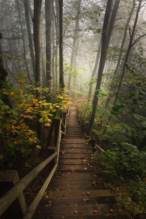 High angle view of the wooden forest stairway in a sunrise fog. Soft morning light. Old trees, colorful golden leaves and plants close-up. Idyllic autumn scene. Gauja national park, Sigulda, Latvia