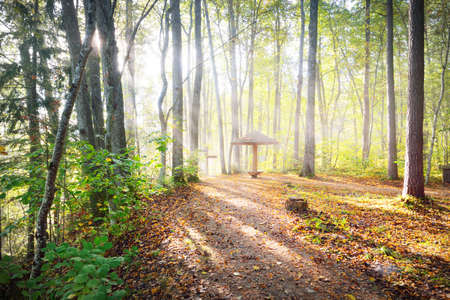 Panoramic view of the rest area in a golden forest at sunrise. Soft morning light. An open wooden gazebo close-up. Idyllic autumn scene. Gauja national park, Sigulda, Latvia. Eco tourism, recreation