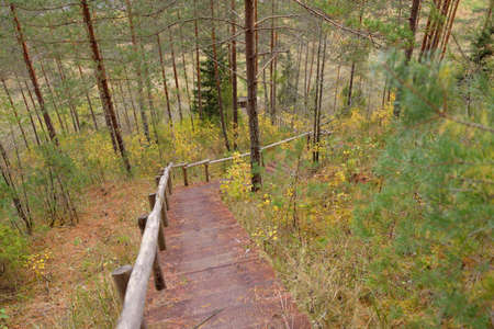 Wooden forest stairway. Old pine and birch trees, colorful green, yellow, golden leaves close-up. Idyllic autumn scene. Daugavas Loki nature park Latvia. Ecology, ecotourism, travel destinations 스톡 콘텐츠