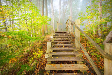Low angle view of the wooden forest stairway in a sunrise fog. Soft morning light. Old trees, colorful green and golden leaves close-up. Idyllic autumn scene. Gauja national park, Sigulda, Latvia 스톡 콘텐츠