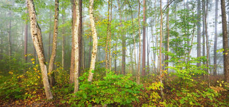 Panoramic landscape of the forest hills in a fog at sunrise. Soft light, sunbeams. Green trees, colorful leaves, moss, fern, plants close-up. Sigulda, Latvia. Ecology, seasons, autumn, eco tourism 스톡 콘텐츠