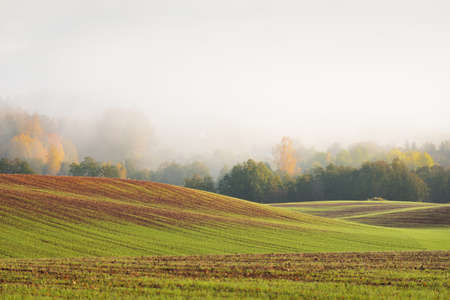Green hills, plowed agricultural field with tractor tracks and forest at sunrise, close-up. Golden trees. Sunlight, fog, haze. Pastoral autumn landscape. Idyllic rural scene. Germany