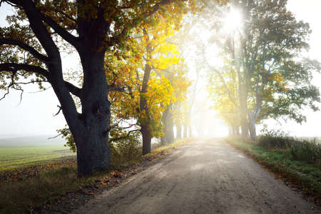 Single lane rural road (alley) through deciduous oak and maple trees. Natural tunnel. Sunlight, sunbeams, fog, shadows. Fairy autumn scene. Hope, heaven concepts. Nature, ecology, walking, cycling 스톡 콘텐츠