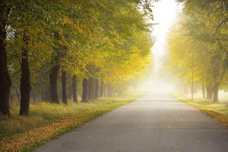 Single lane rural asphalt road (alley) through deciduous trees. Golden sunlight, sunbeams, fog, shadows. Fairy autumn scene. Hope, heaven, wilderness, loneliness, nature, ecology, walking, cycling