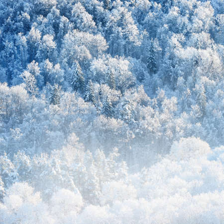 Panoramic aerial view of snow-covered forest hills on a clear day. Morning fog. Mighty trees in a hoarfrost, natural blue pattern. Winter wonderland. Seasons, ecology, global warming, ecotourism