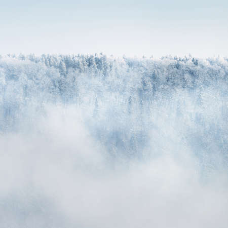 Panoramic aerial view of snow-covered forest hills on a clear day. Morning fog. Mighty trees in a hoarfrost. Winter wonderland. Seasons, ecology, global warming, ecotourism, christmas vacations