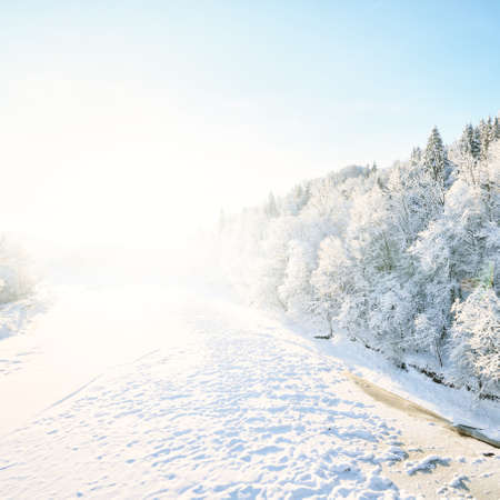 Breathtaking aerial view of river and snow-covered forest after a blizzard in a morning haze. Fir trees close-up. Clear sky. Winter wonderland. Gauja national park, Sigulda, Latvia. Nature, seasons